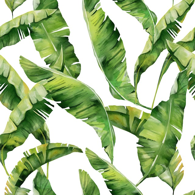 Leaves, Tropical, Plant, Palm, Summer, Exotic