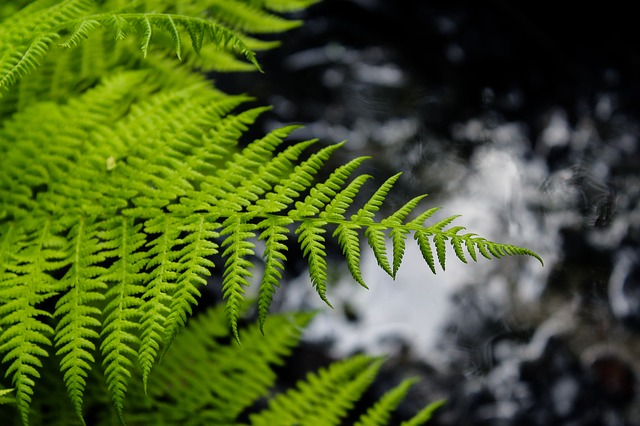 Fern, Plant, Sheet, Nature, Summer, Background, Tree
