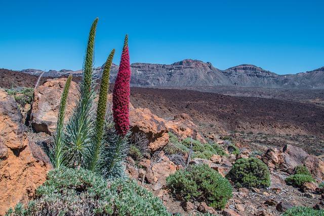 Tenerife, Teide National Park, Volcano, Crater, Plant