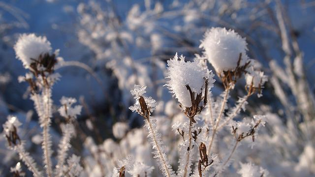 Snow, Plant, The Heart Of, Branches, Freezing
