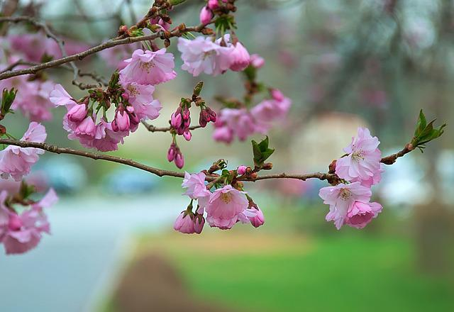 Flower, Tree, Branch, Plant, Nature, Flowers