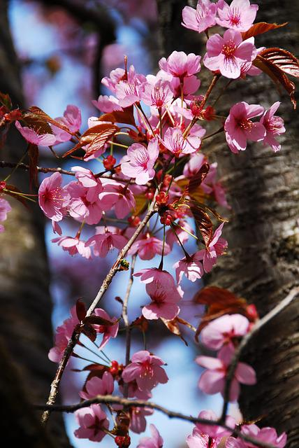 Tree, Flower, Branch, Nature, Plant