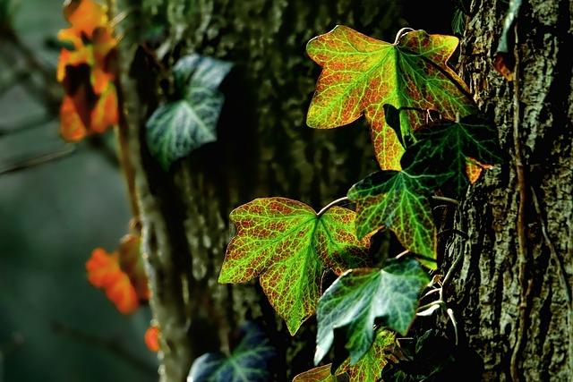 Leaf, Nature, Plant, Tree, Ivy, Back Light