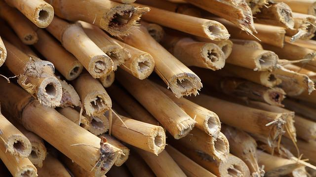 Bamboo, Bamboo Garden, Plant, Woody, Wood, Stalk, Tube