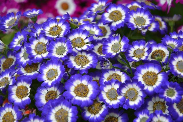 Flower, Plant Venezia, Nature, Plant, Decoration