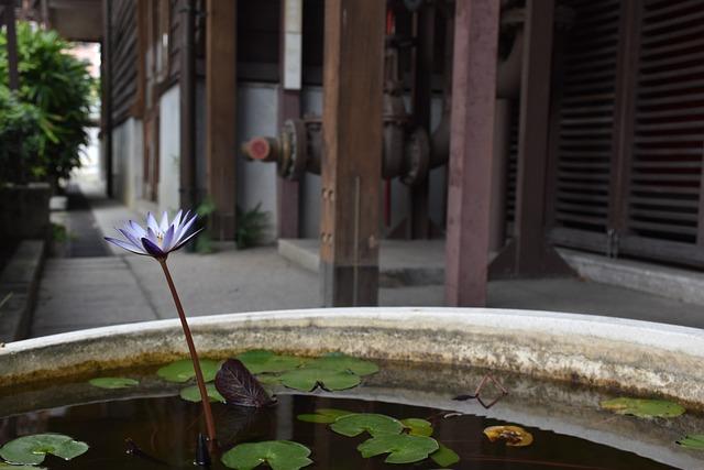 Flower, Lotus, Water, Nature, Plant, Fresh, Green