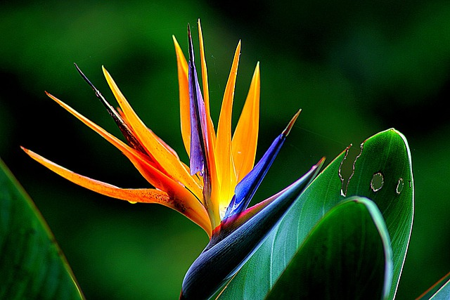 Flower, Wildflower, Bird Of Paradise, Floral, Plant