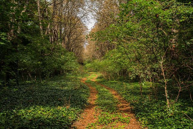 Nature, Landscape, Wood, Cemetery, Plant, Outdoors