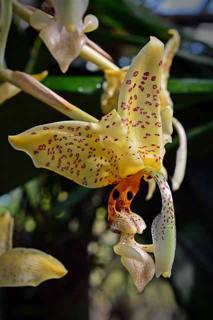 Orchid, Blossom, Bloom, Flower, Close, Yellow, Plant