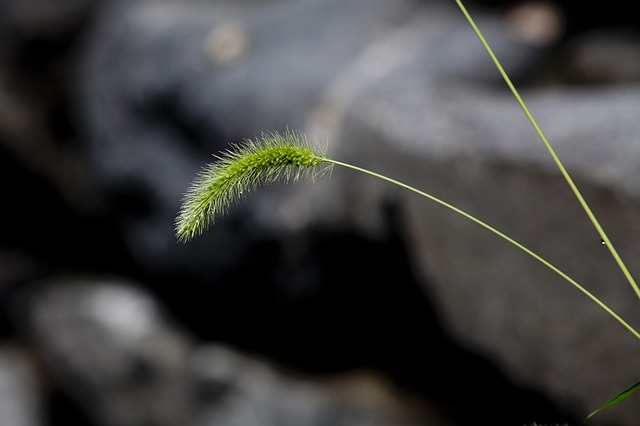 Nature, Foxtail, Pool, Green, Plants, Abstract