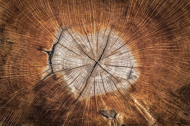 Wood, Annual Zone, Nature, Texture, Plants, Pattern