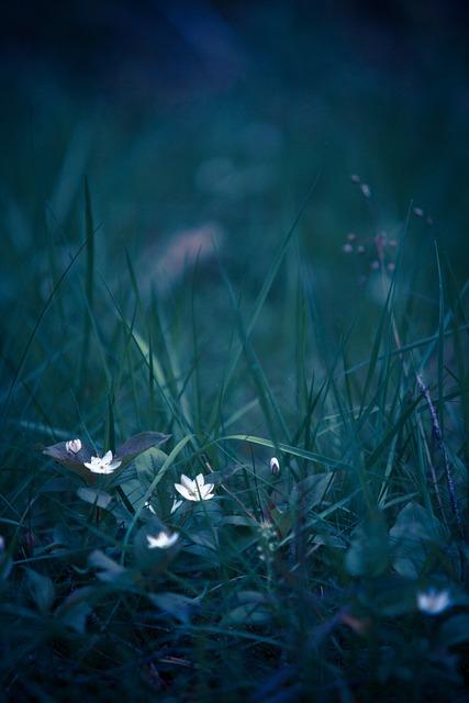 Summer, Flower, Wood Anemone, Natural Flower, Plants