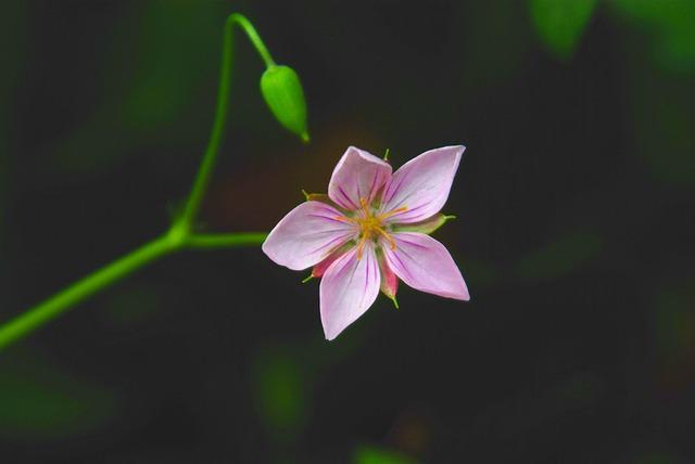 Nature, Flowers, Plants, Leaf, Wildflower