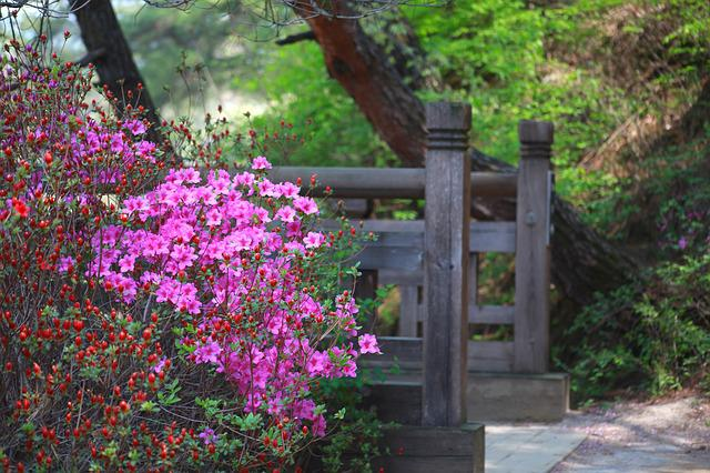 Nature, Wood, Flowers, Plants, Outdoors, Azaleas Flower