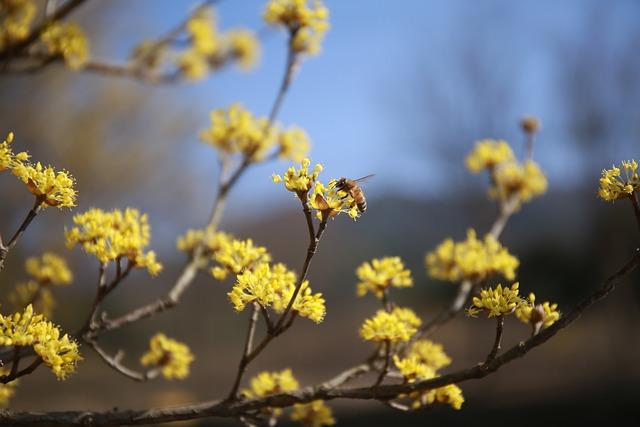 Cornus, Flowers, Nature, Plants, Yellow, Spring