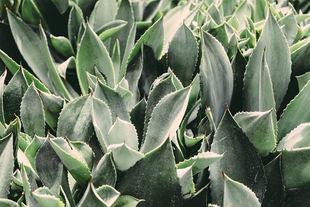Plants, Cactus, Cacti, Botanical, Botany, Garden
