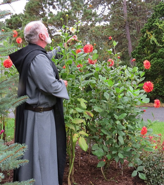 Dahlias, Monk, Benedictine, Garden, Floral, Plants