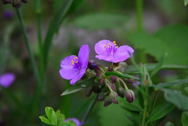 Nature, Flowers, Plants, Leaf, Garden, Summer, Petal