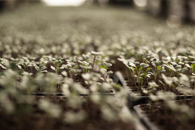 Vegetable Plot, Vegetable, Sprout, Plants, Grow, Garden