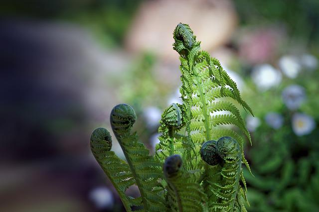 Spring, Plant, Green, Plants, Nature, Garden, Polypody