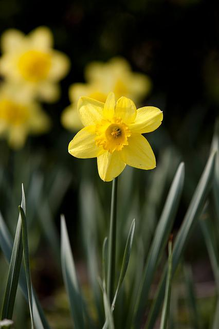 Spring Flowers, Nature, Plants, Flowers, Spring