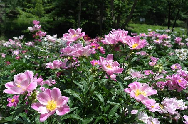Noel Online Gift Shop, Flowers, Nature, Plants, Garden