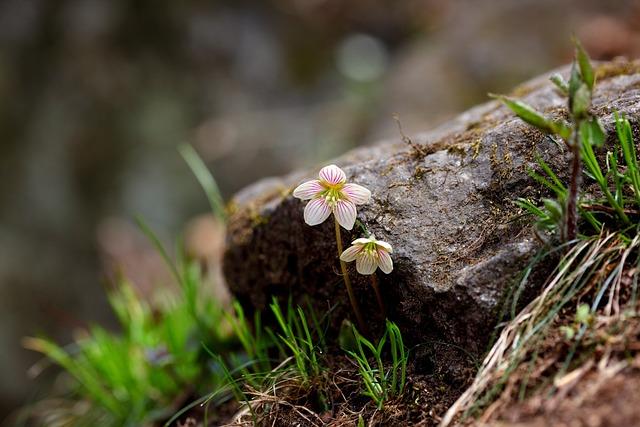 Nature, Plants, Flowers, Leaf, Oxalis Corniculata