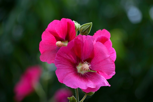 Flowers, Plants, Nature, Garden, Summer