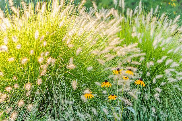 Grass, Flowers, Green, Yellow, Garden, Plants, Summer