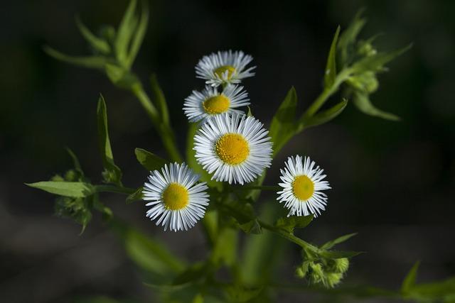 Nature, Plants, Flowers, Summer, Leaf, Wildflower