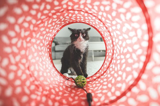 Cat, Play, Toy, Cute, Domestic, Animal, Pet, Furry