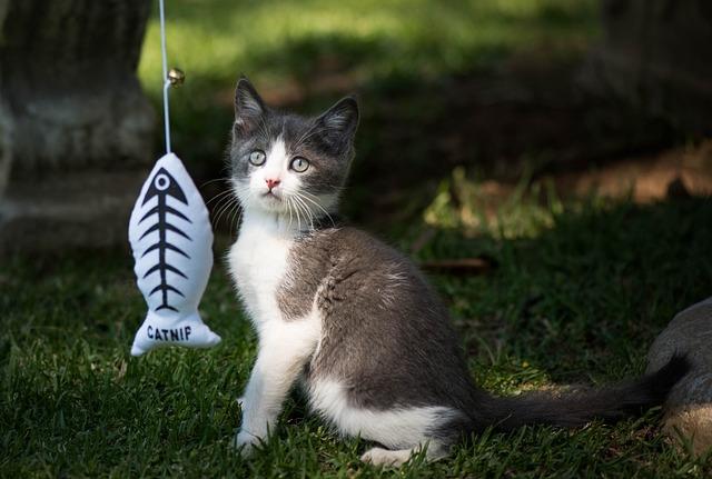 Kitten, Toys, Playful, Eyes, Cute, Beautiful