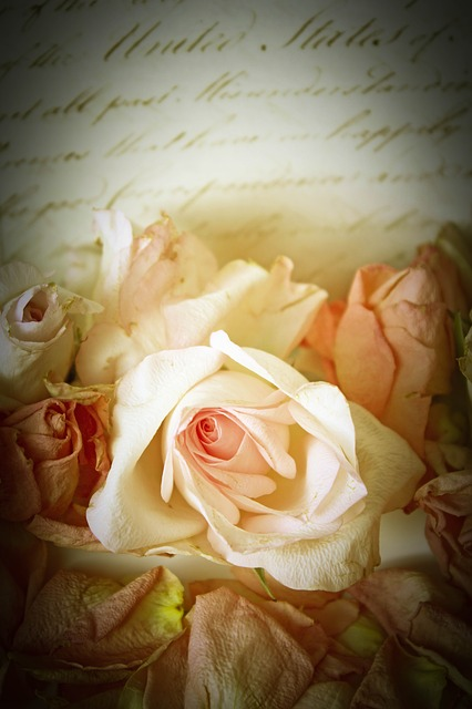 Roses, Vintage, Playful, Romantic, Background