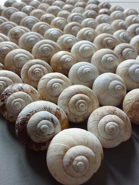 Snails, Some, Army, Spiral, Worm, House, Playhouse