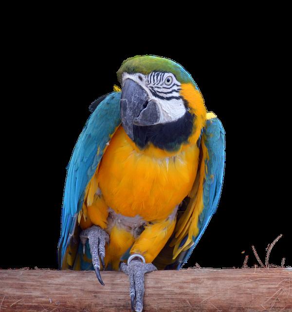 Parrot, Ara, Bird, Animal, Animal World, Plumage