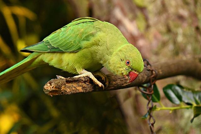 Parrot, Bird, Animal, Feather, Plumage, Beak, Eye, Claw