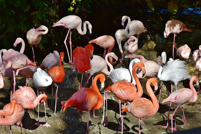 Flamingo, Bird, Pink, Bill, Plumage, Feather, Birds