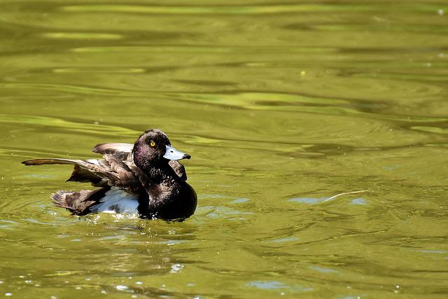 Row Pension, Blue Beak, Water Bird, Nature, Plumage