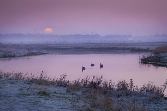 Mute Swans, Bird, Water, Nature, Animal, Plumage