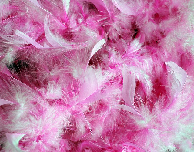 Pink Feathers, Feathers, Pink Plumage, Plumage