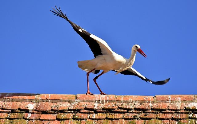 Stork, Bird, Fly, Plumage, Nature, Animal World, Wing