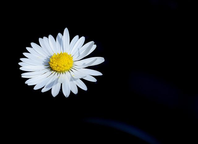 Daisy, Swim, Flower, Nature, Pointed Flower