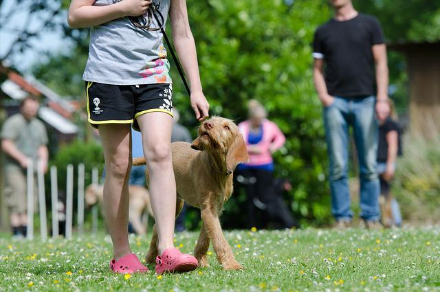 Dog School, Dog Training, Pointing Dog