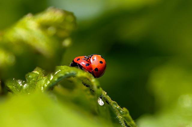 Animals, Beetle, Chafer, Insect, Points, Lucky Ladybug