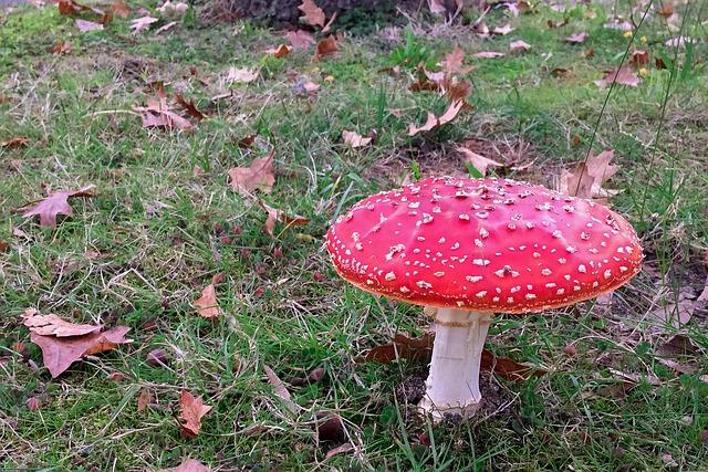 Mushroom, Toadstool, Poisonous, Fungi, Nature, Fairy