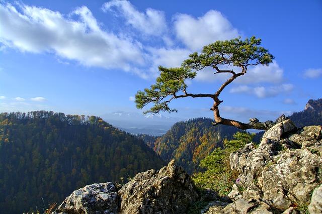 Pieniny, Pine, Mountains, Trail, Poland, Tour, Nature