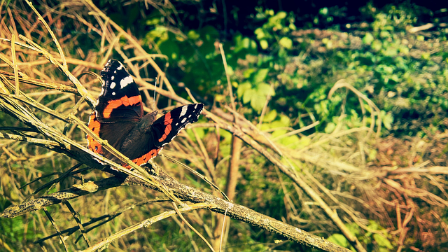 Butterfly, Green, Nature, Poland