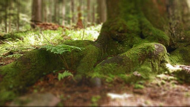 Babia Top, Poland, Nature, Tree, Vegetation
