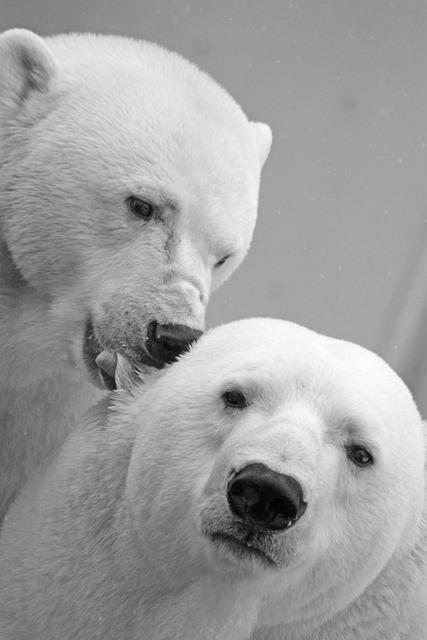 Polar Bear, Bear, Teddy, Sleep, Lazy, Rest, Animal