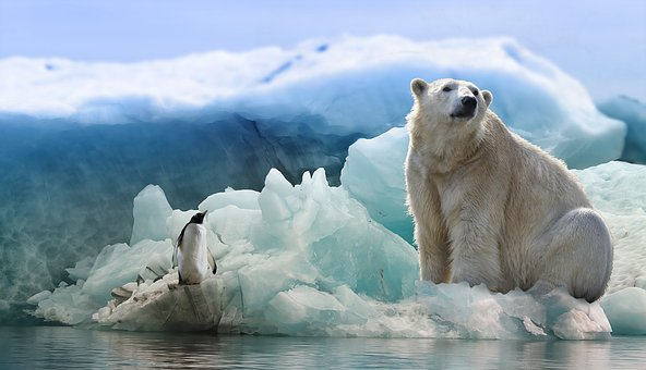 Polar Bear, Penguin, Arctic, Antarctica, Predator, Bird